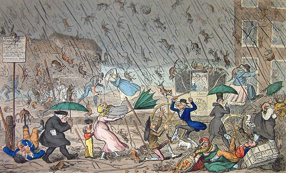 IT'S RAINING CATS AND DOGS… Why turning to a professional translator may be a wise idea!